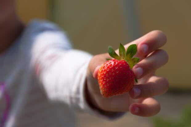 «Хранить разрезанный арбуз можно всего сутки». В каких случаях фрукты и ягоды могут привести к отравлению