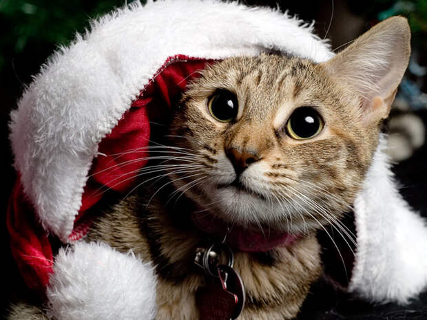 3166706_Snickers___First_Christmas_by_burns529 (700x525, 170Kb)