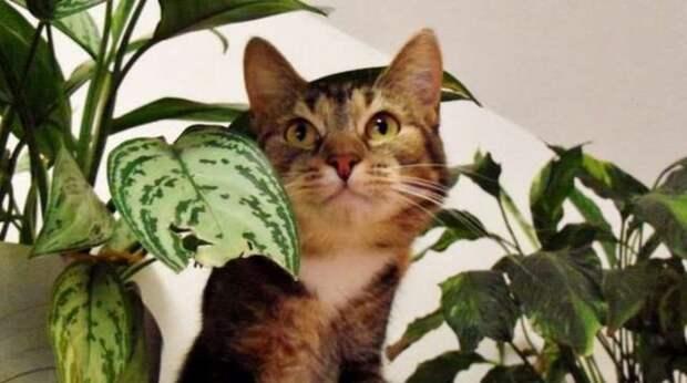 «Ой-ой!» — говорит кошка. МУРлыка и впрямь научилась «разговаривать»