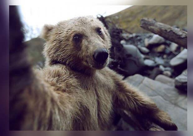 10 фото-доказательств того, что животные тоже любят делать селфи
