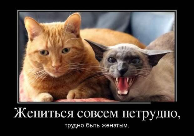 Смешные и классные демотиваторы из нашей жизни для улыбки и позитивного настроения