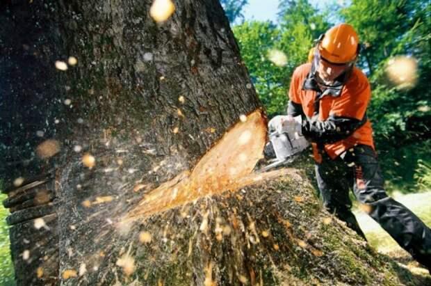 В центре Севастополя на прохожих валят деревья (ВИДЕО)