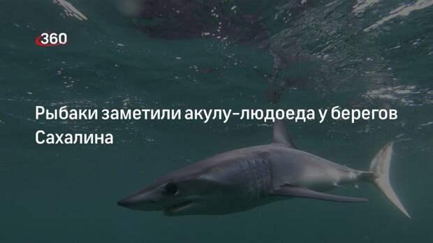 Рыбаки заметили акулу-людоеда у берегов Сахалина