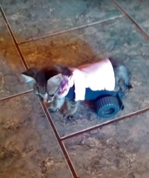 котенок в коляске