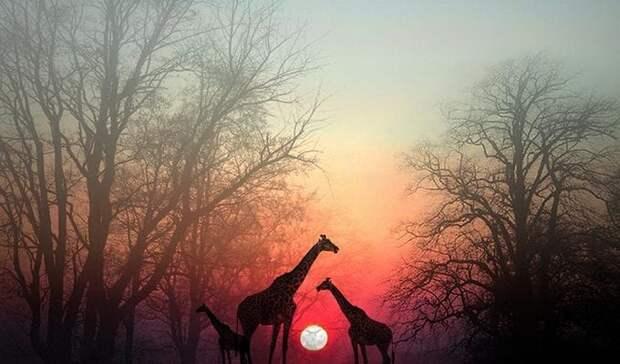 Остановитесь на минутку, чтобы душа вас догнала: красивая африканская притча