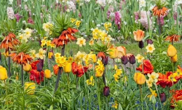 7 необычных луковичных цветов для посадки осенью