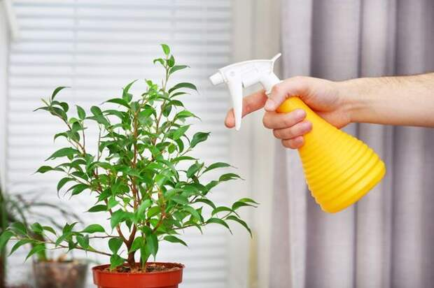 Преображаю комнатные цветы горячим душем