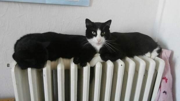 Забавные снимки с котами, где не сразу понятно что происходит..