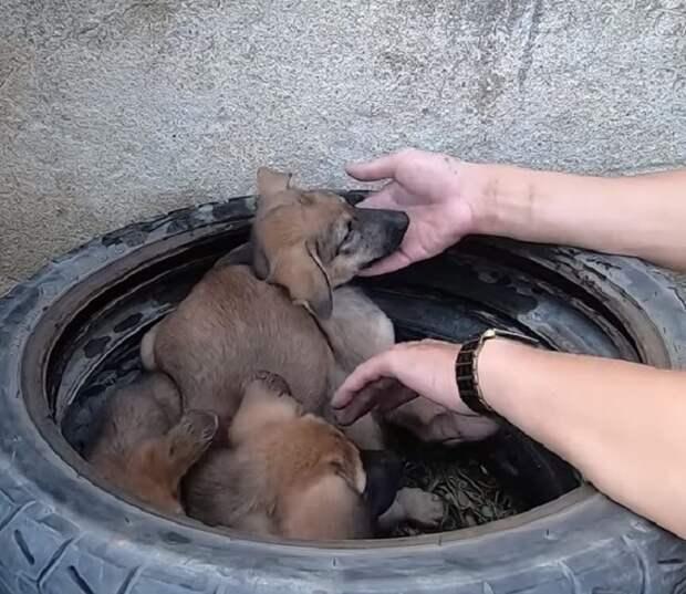 Три щенка сидели в шине возле мусорника, но люди не спешили обратиться в приют