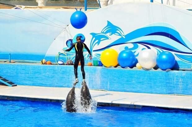 Новый виток скандала: севастопольский «Дельфинарий» переезжает в Парк Победы