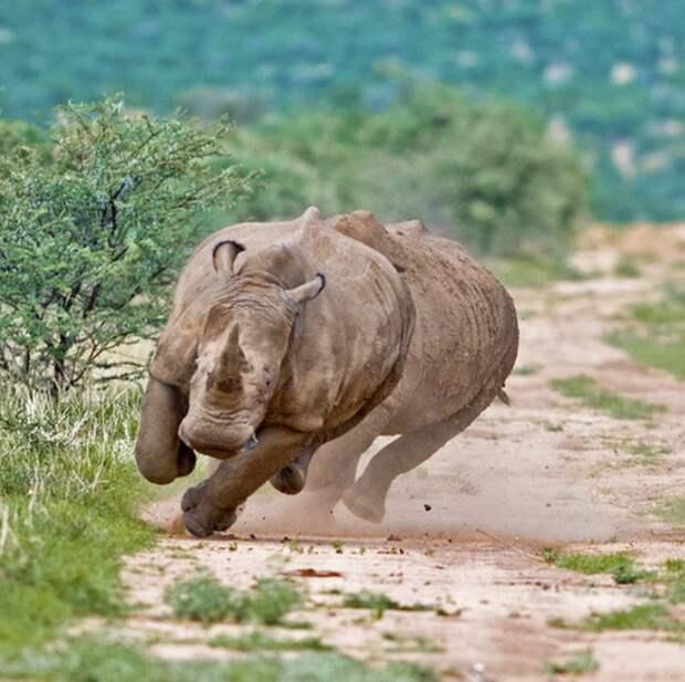 Незнакомые факты о знакомых животных