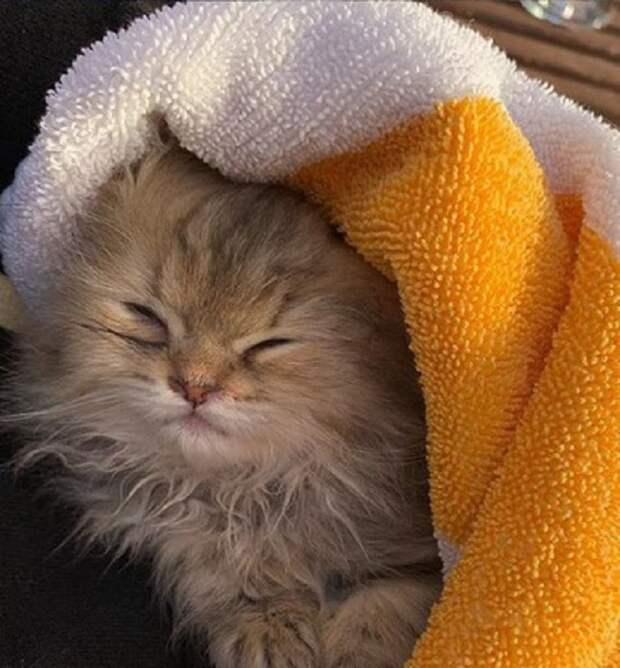 Котенок укрыт полотенцем