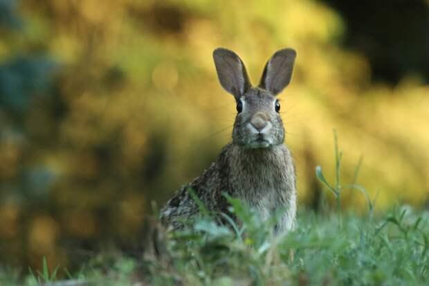На треке «Формулы-1» едва не погиб заяц (видео)