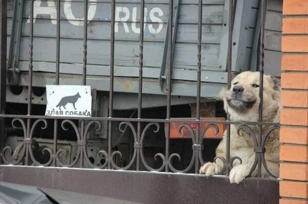 16. Осторожно, злая собака в хорошем настроении! животные, кошка, прикол, собака, табличка, умора, юмор