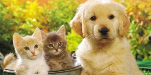 В России могут начать маркировать домашних животных