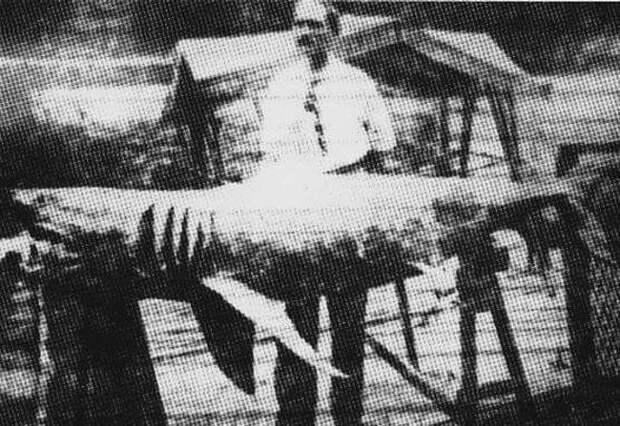 7 фактов о нападении акулы на людей, которым вдохновились создатели «Челюстей»