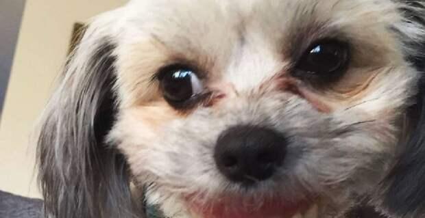 Почему не стоит оставлять зубные протезы там, где до них может добраться собака животные, зубные протезы, зубы, прикол, собака, юмор