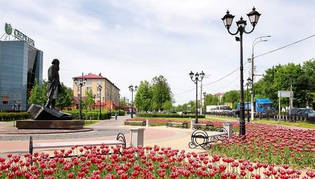 300 тыс тюльпанов должны распуститься в Подольске к 75‑й годовщине Победы