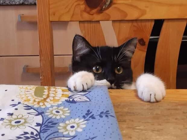 Как белорусская кошка нашла свою «итальянскую маму»