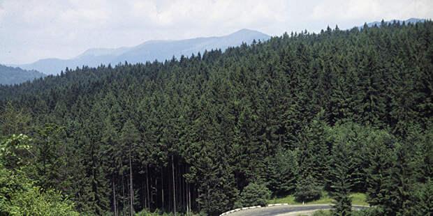 На Украине задумались о декоммунизации леса