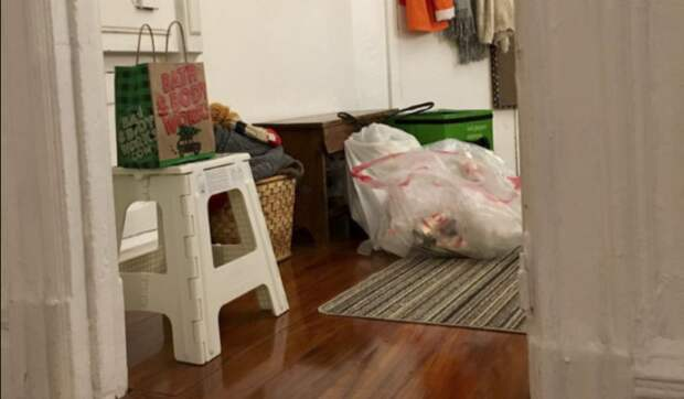 Эта кошка-ниндзя каждый день прячется в новом месте, и найти ее не так просто