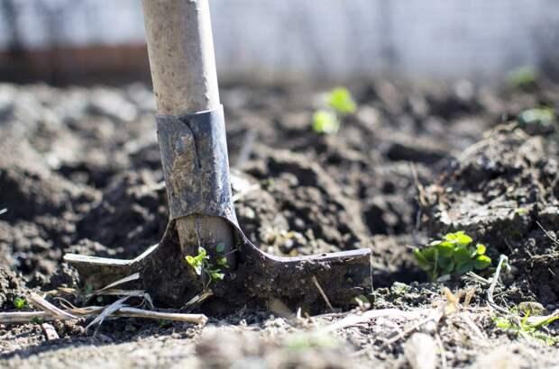 Деревья на Лавочкина высадят позже — управа