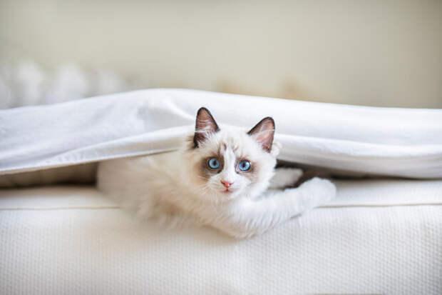 Как помочь кошке адаптироваться в новой квартире