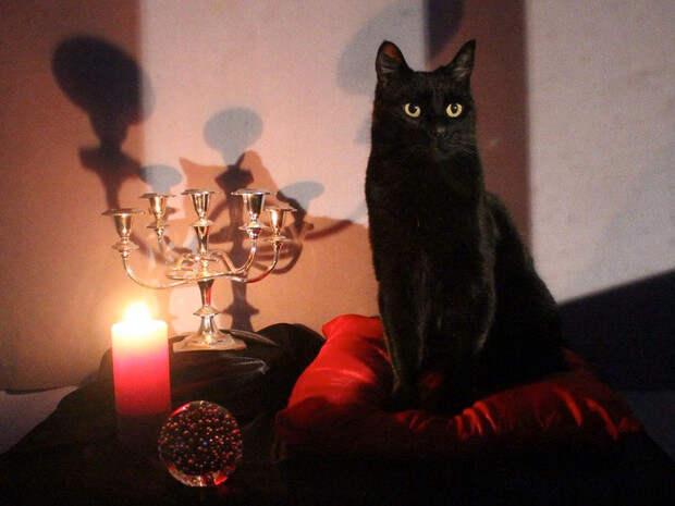 Фото №1 - От черного кота до разбитого зеркала: самые популярные приметы (и что они означают на самом деле)