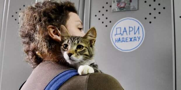Москвичи собрали рекордное количество кормов в помощь приютам для бездомных животных. Фото: mos.ru