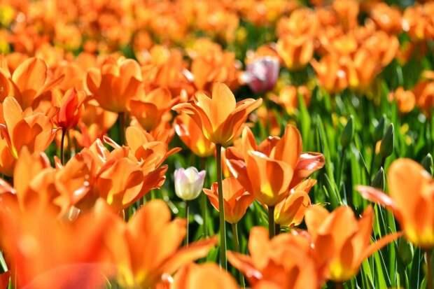 В Тимирязевском жители выберут места для посадки цветов