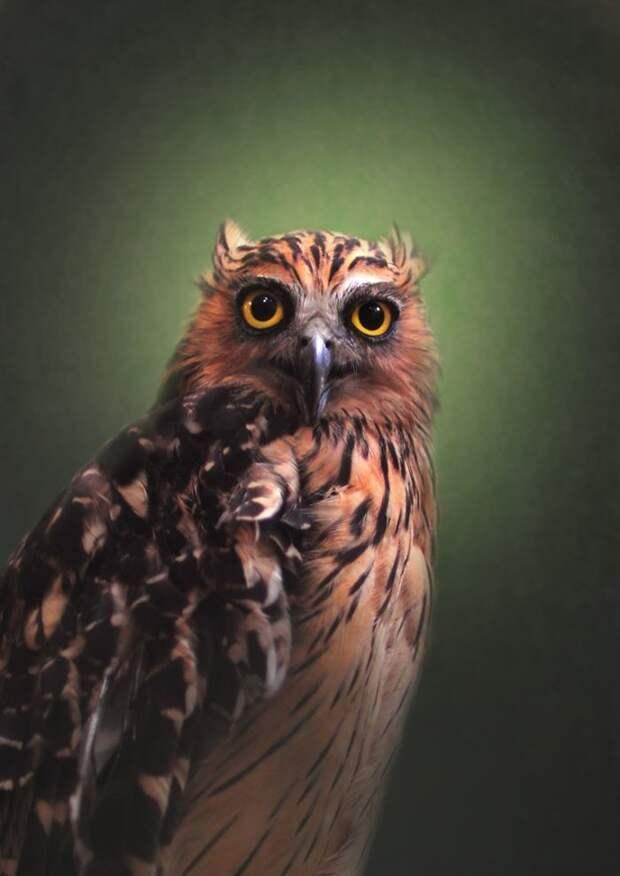 19 гипнотически красивых сов, пойманных в объектив фотографа дикая природа, красиво, мир, планета, природа, птицы, совы, фото