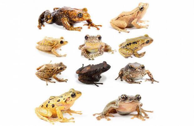 7 необычных видов животных, которых открыли в 2019-м году