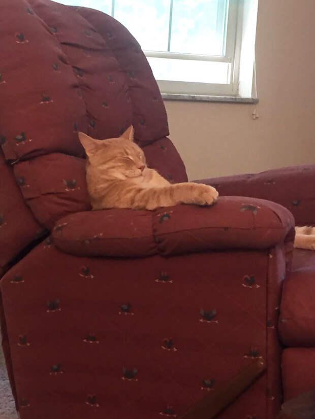 Этот - миролюбиво поспать в кресле животные, коты, кошки, неожиданно, привычки, странности, фото, юмор