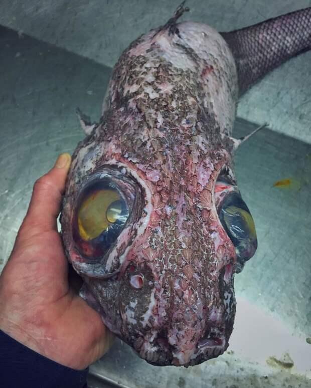 Сон разума рождает чудовищ. Очередной монстры, море, рыбалка, рыбы, улов