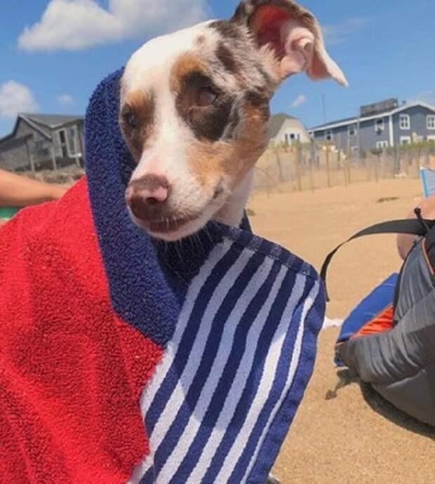 Увидев больную собаку, волонтеры решили ее усыпить, но судьба распорядилась иначе