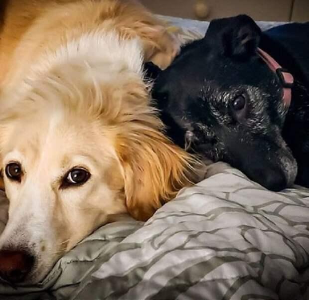 Чёрно-белая судьба двух разных, но очень милых сестричек