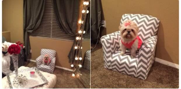 Собственное кресло животные, жизнь, мир, роскошь, собака, удобство, фото