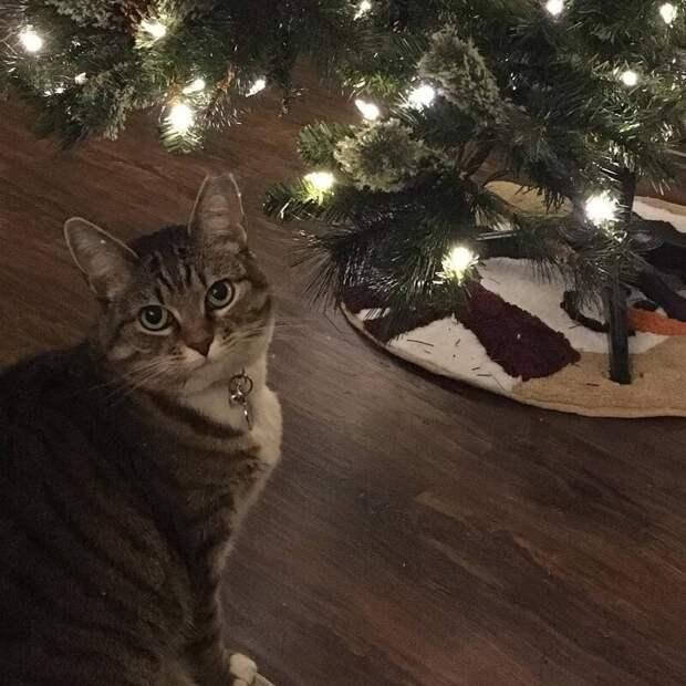 Как завернуть подарки, если у вас есть кот? Пошаговая инструкция