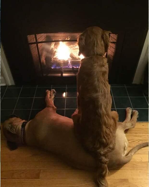 10. Собачья дружба и взаимовыручка в действии домашние животные, домашние животные.собака, забавные собаки, пес, смешные фото, собаки, фото собак, юмор
