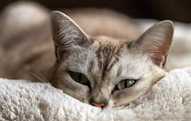 Как ухаживать за котом/кошкой после стерилизации