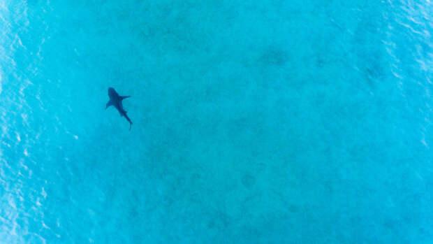 Ученые впервые сфотографировали светящуюся в темноте акулу