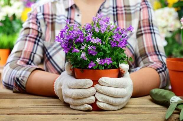 Назад, к природе? Стоит ли использовать натуральные удобрения для цветов