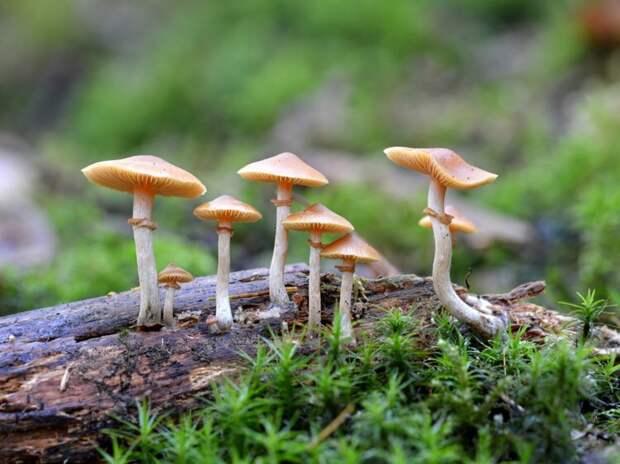 Больные раковыми опухолями пахнут  грибами. Источник изображения: fmsq.org