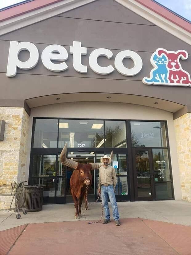 Для проверки Винсент привёл в магазин Оливера — своего здоровенного быка-ватусси в мире, животные, забавно, люди, магазин, поводок