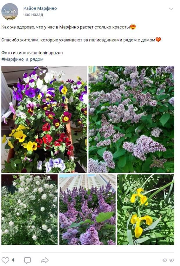 Фото дня: распустившиеся цветы в Марфине попали в кадр
