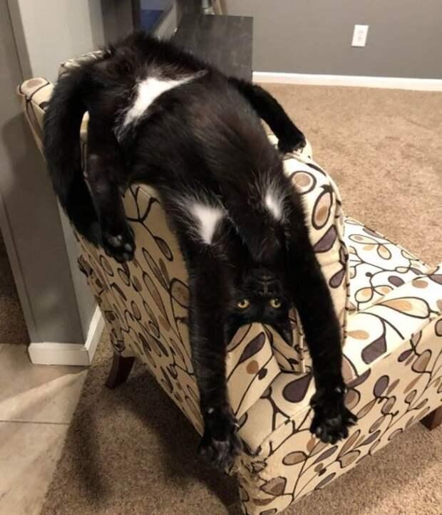 Подборка смешных фото котиков
