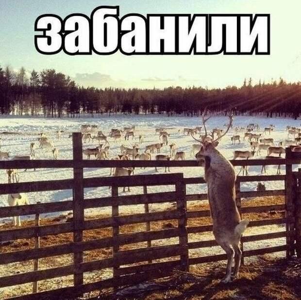 1414737455_podborlD