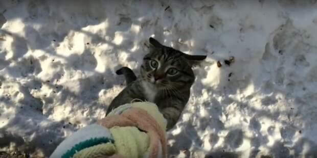 Нестандартный способ возвращения кота с прогулки…)