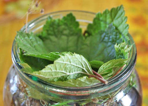 смородинный лист