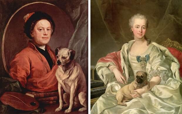 Ветеринары просят не покупать собак «плосконосых» пород